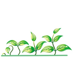 progression of seedling growth vector image vector image