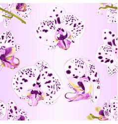 seamless texture orchids phalaenopsis purple vector image