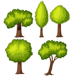 different types of green tree vector image