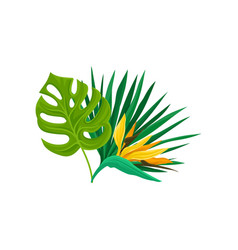 green leaves of tropical palm tree and bird of vector image