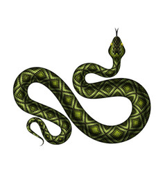 realistic python vector image