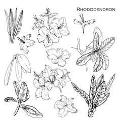 set with botanik ink herbal vector image
