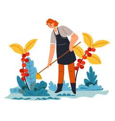 Woman weeding getting rid grass on plantation vector