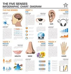 The Five Senses Infographic Chart Diagram vector image