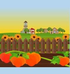 pumpkin harvest garden background vector image vector image