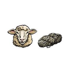 sketch cartoon sheep head cutted wool set vector image