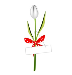 A Fresh White Tulip with Red Ribbon vector image