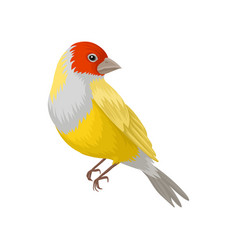 Detailed portrait of yellow lady gouldian vector
