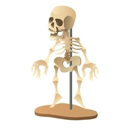 Human skeleton mannequin on white background vector