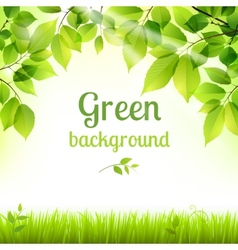 Natural green fresh foliage background vector image