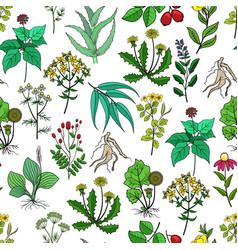 Drug plants and medicinal herbs background vector