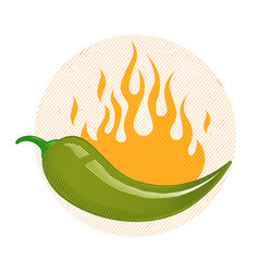 Green chili pepper in fire vector