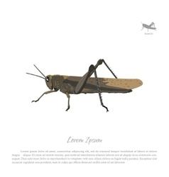 Locust on white background Image grasshopper vector image