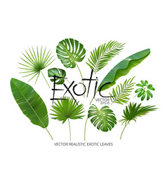 Tropical exotic leaves realistic jungle vector