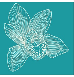 White orchid on blue background vector image
