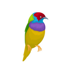 detailed portrait of gouldian finch exotic vector image