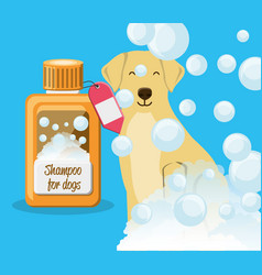 Dog with shampoo bottle vector