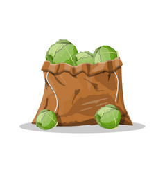 Fresh cabbage with green leaves in canvas bag vector