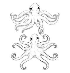 octopus hand drawn sketch vector image