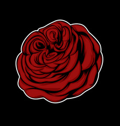 red rose flower isolated on black background vector image