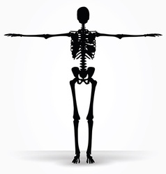 skeleton silhouette in default pose vector image