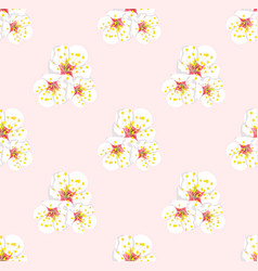 White plum blossom seamless on pink background vector