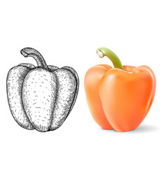 bell pepper black hand drawn sketch and 3d vector image