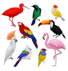 detailed set of various exotic birds wild vector image