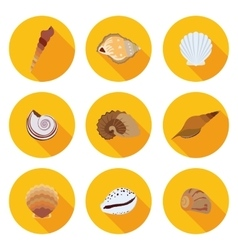 flat icons seashells vector image