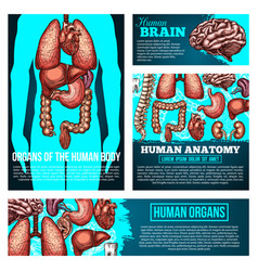 Human body anatomy banner with organ bone sketch vector