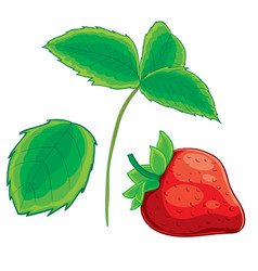 strawberry set from berry leaf and stem cartoon vector image