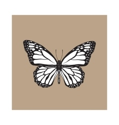 Top view beautiful monarch butterfly isolated vector