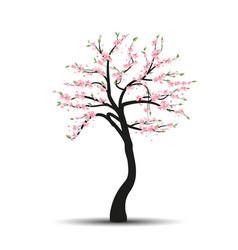 tree sakura vector image