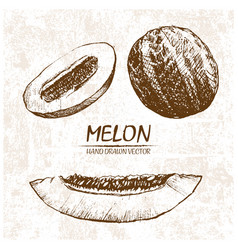 digital detailed melon hand drawn vector image vector image