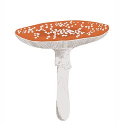 Fly agaric vector image