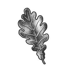 Oak leaf sketch vector