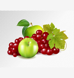 red grapes green apples apple isolated vector image