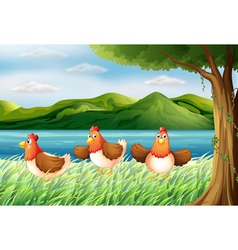 The three chickens at the riverbank vector