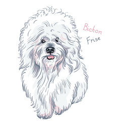 White cute dog bichon frise breed vector