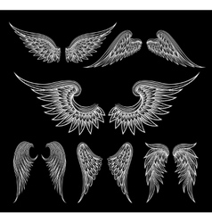 White wings on black background vector image vector image