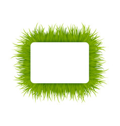 green grass square frame vector image