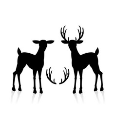 male and female deer vector image