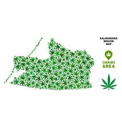 Marijuana composition kaliningrad region vector