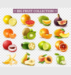 realistic fruit set vector image