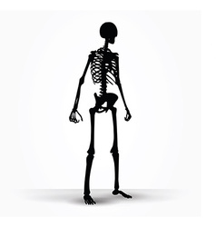 skeleton silhouette in standing pose vector image
