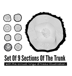 Cross section of the trunk vector image