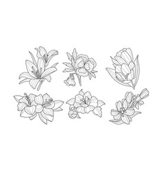 set of beautiful blooming flowers garden plants vector image