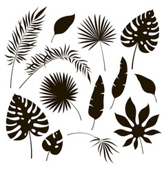 Tropical leaves silhouettes black jungle exotic vector