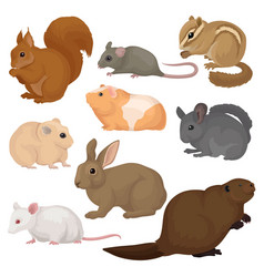 flat set of various rodents small forest vector image