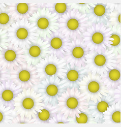 seamless pattern with summer chamomile floral vector image